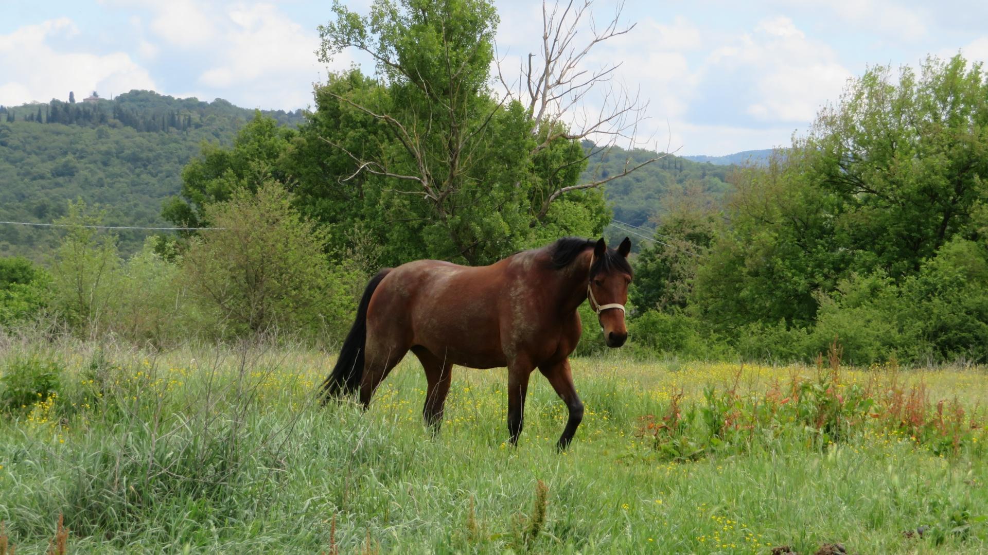 cavallo - se mi chiedono se sono animalista