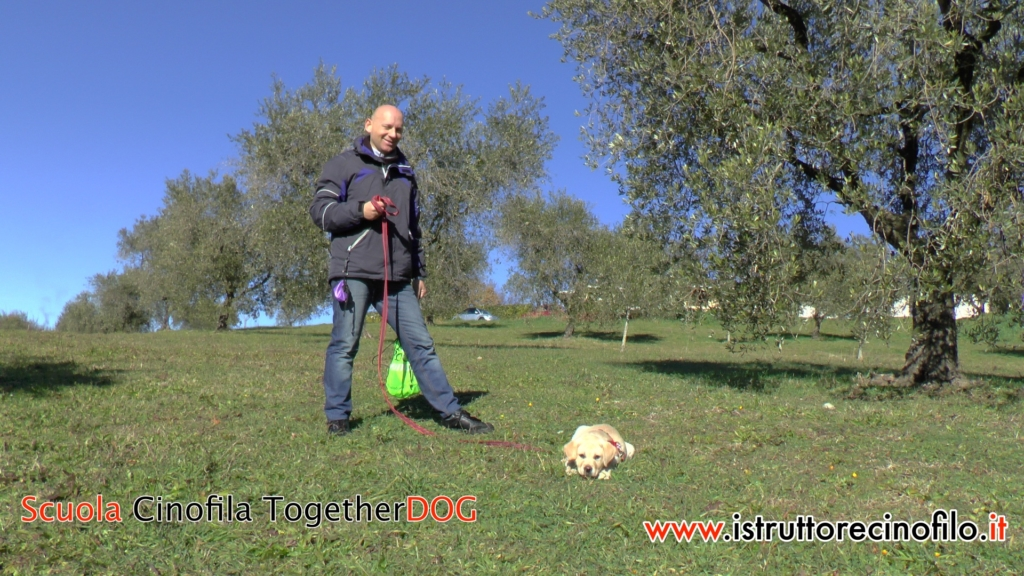 Risultato Testimonianza Giancarlo e Clio cucciola Labrador - Corso Educatore Cinofilo Comportamentale Togetherdog