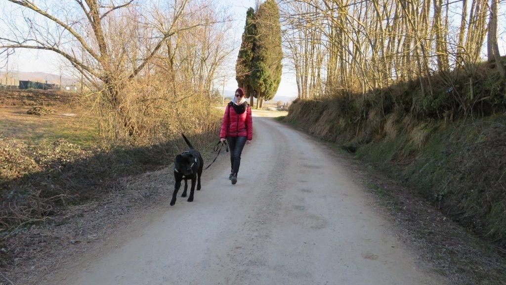 Cane Corso 7 anni - Guida Metodo togetherdog