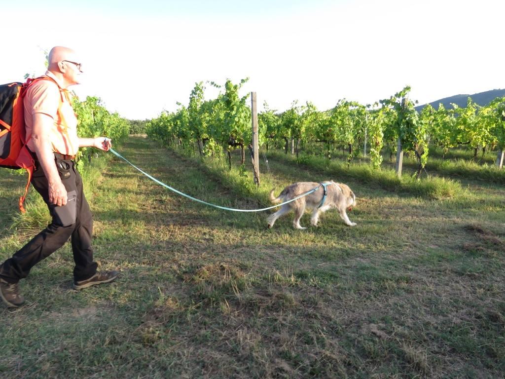 incrocio Schnauzer 11 anni - Guida metodo Togetherdog