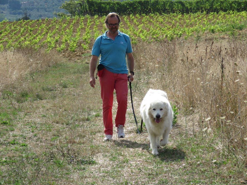 Pastore Maremmano 7 anni - Guida al guinzaglio metodo Togetherdog