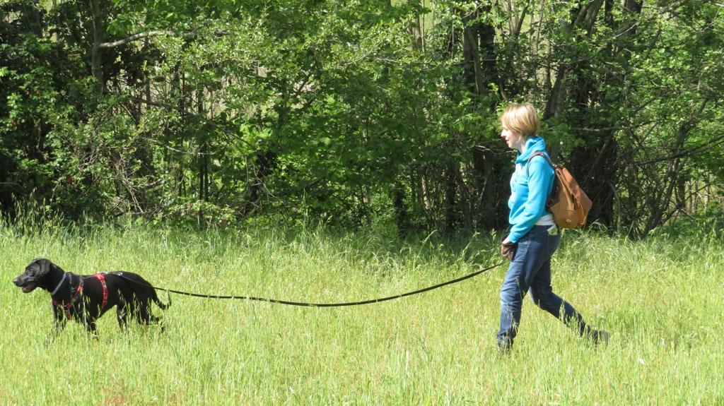Incrocio Rhodesian Ridgeback 2 anni - Guida metodo Togetherdog