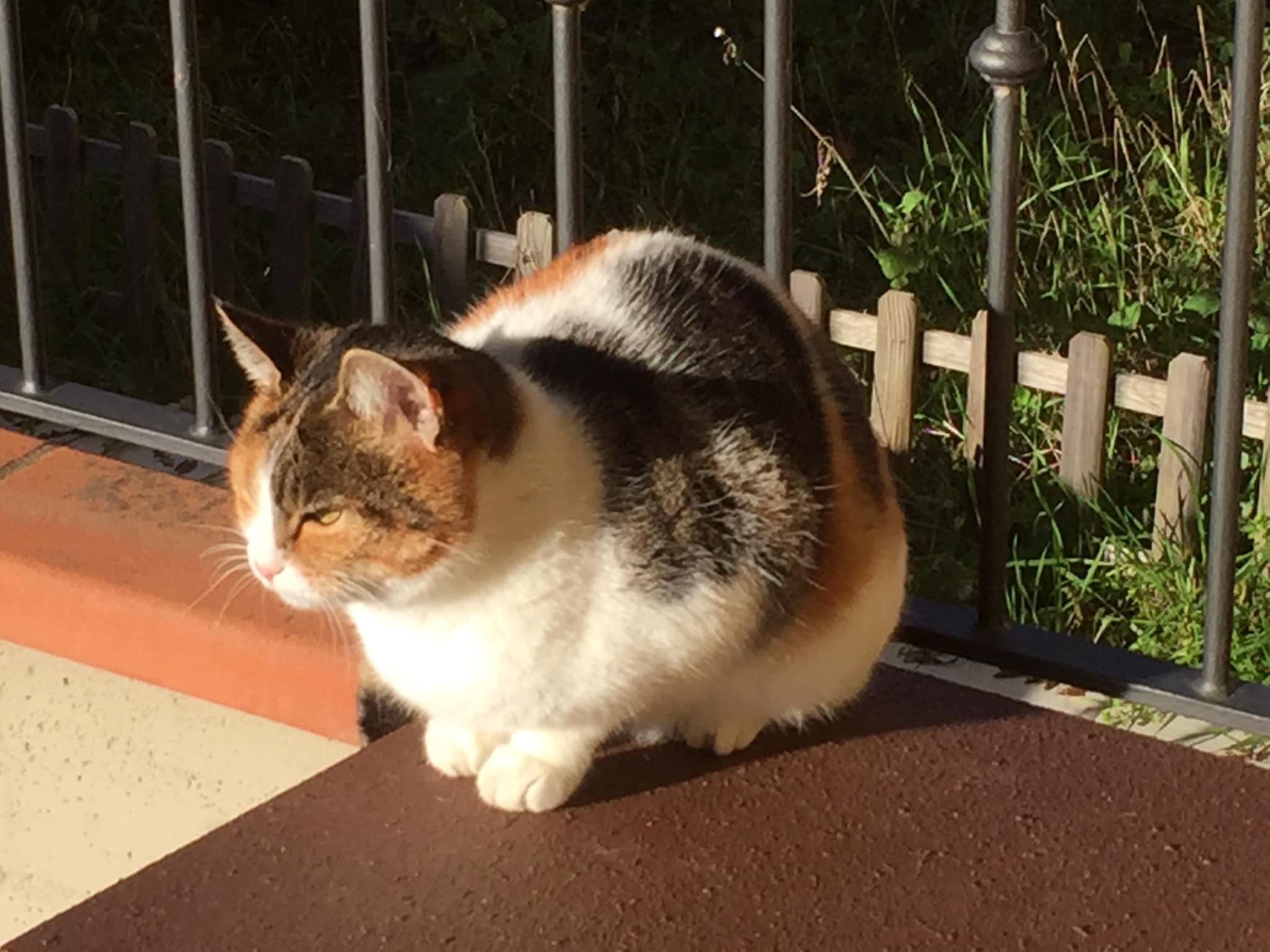 Micia gatta di Stefano Pesci