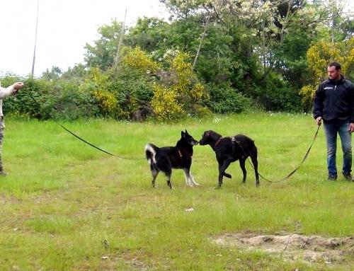 Valdarno: EDUCAZIONE COMPORTAMENTO Addestramento Cani