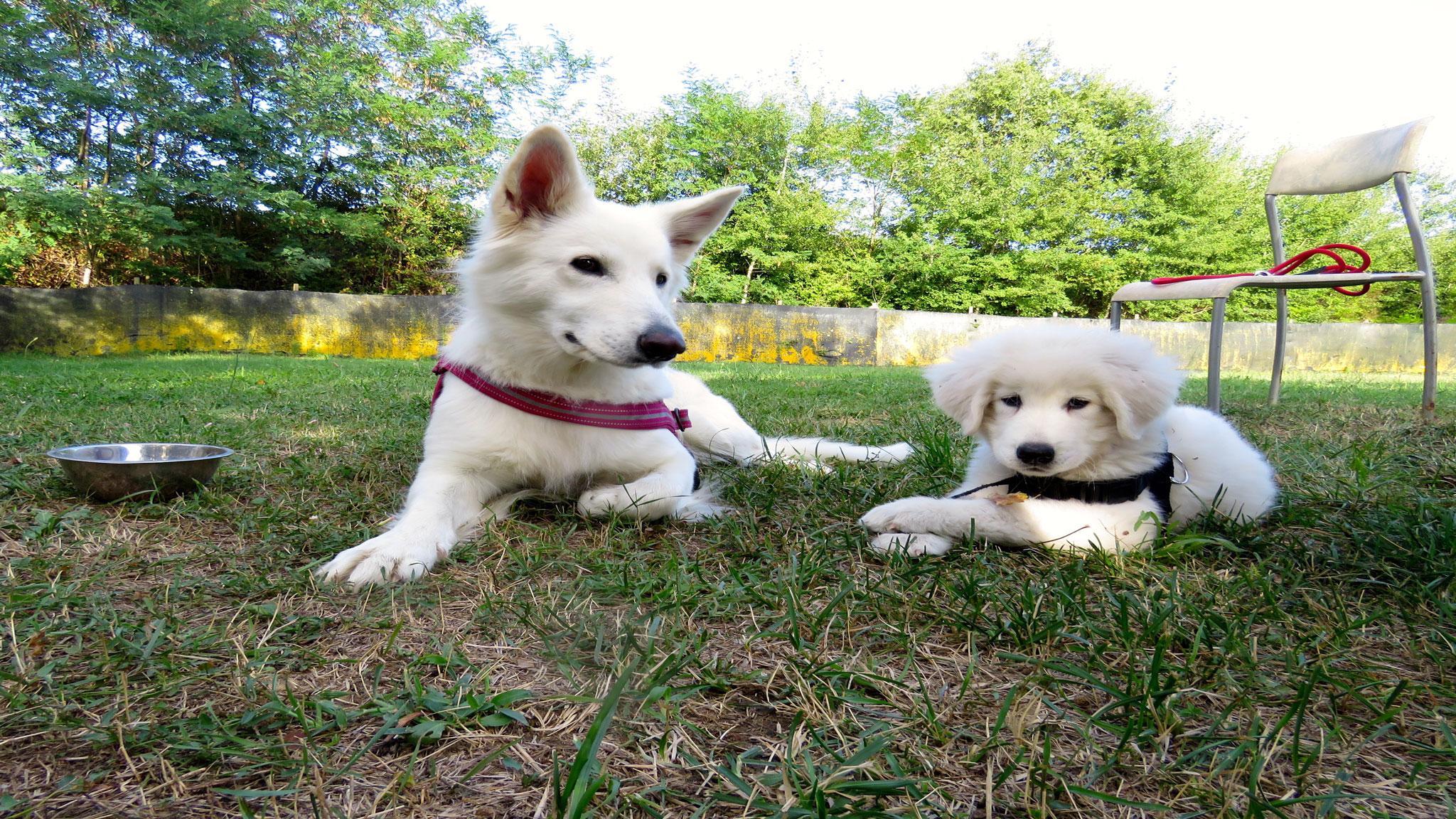 Dicono di Sharon Cane Insegnante con cani cuccioli- Stefano Pesci Istruttore Cinofilo Comportamentale