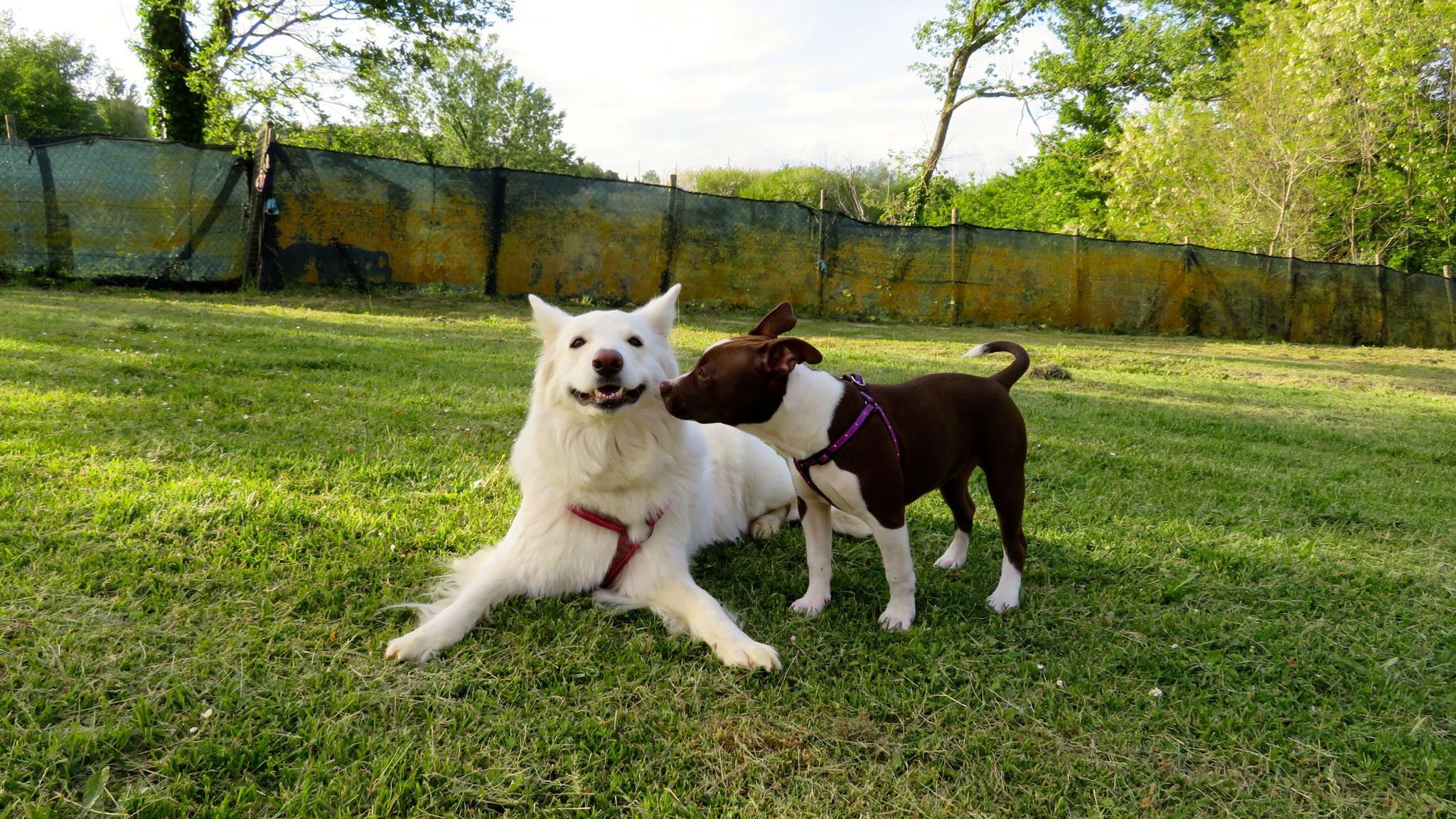 http://istruttorecinofilo.it/blog/corso-cani-cuccioli/