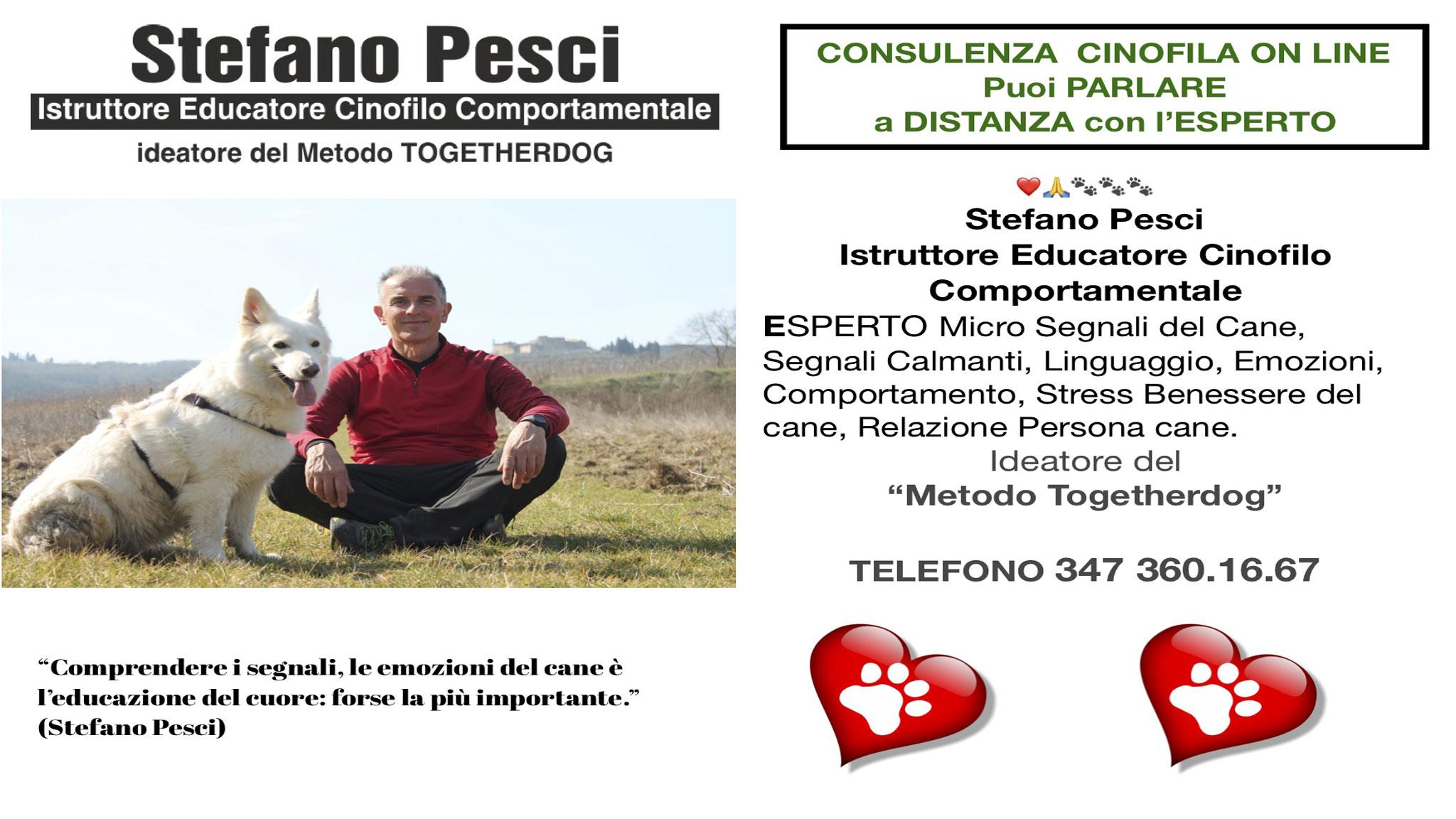 Consulenza Cinofila On Line - Stefano Pesci Istruttore Educatore Cinofilo Comportamentale