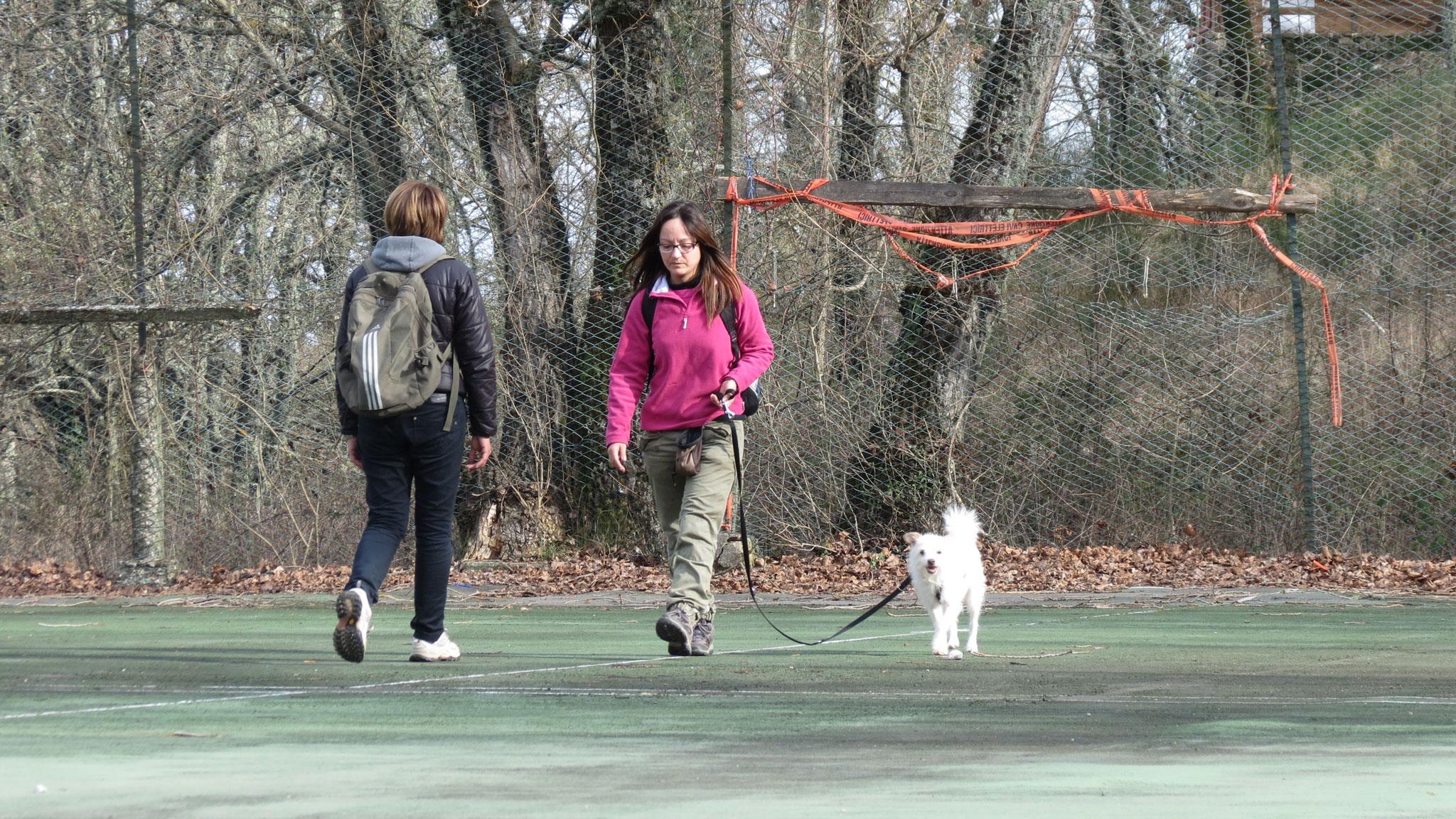 Il mio cane tira - cosa devo fare? -Stefano Pesci Istruttore Educatore Cinofilo Comportamentale