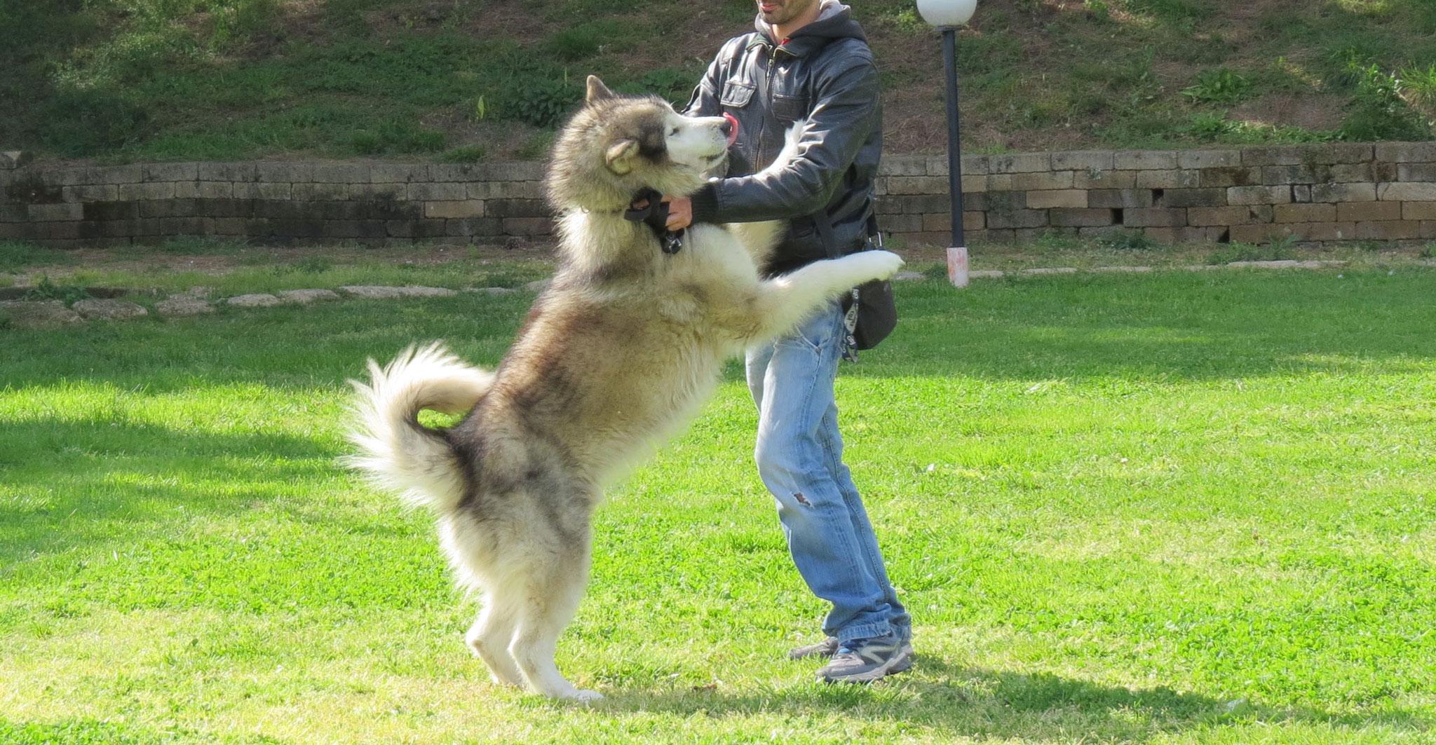 C'era una volta un cane che- stefano Pesci Istruttore Cinofilo Comportamentale