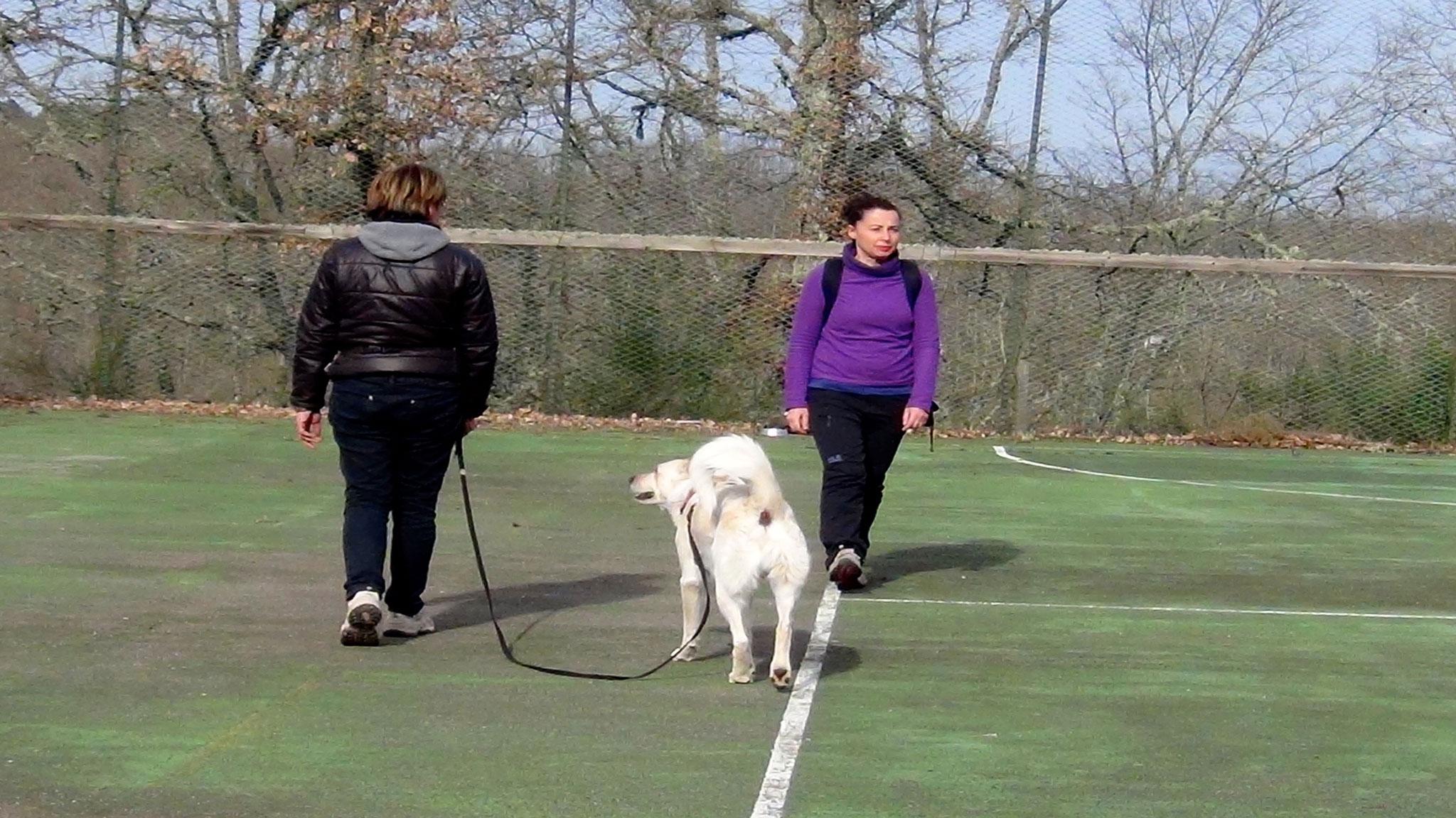 Risultato Esperienza Claudia con Valentino cane meticcio maremmano di 3 anni -Corso Togetherdog Stefano Pesci