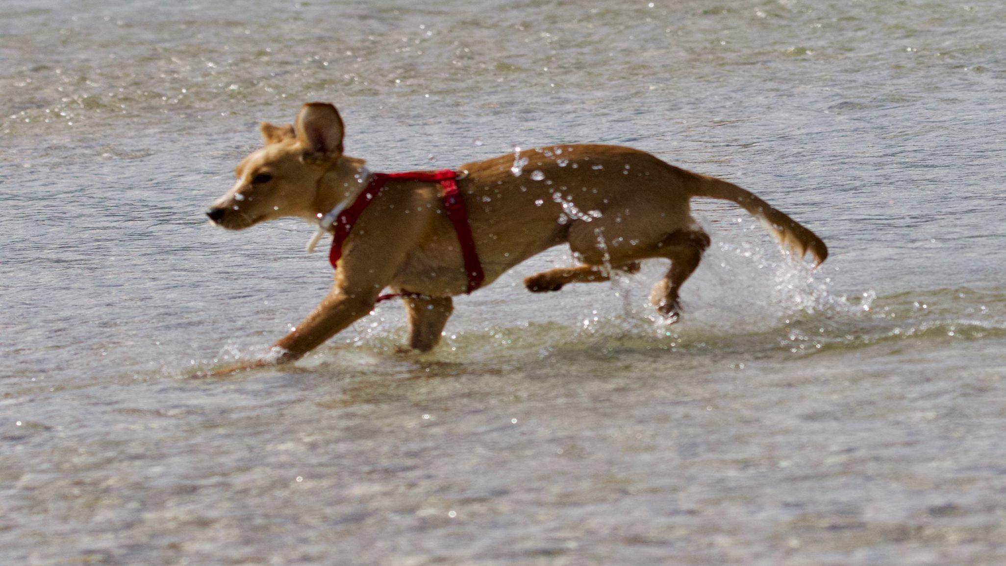 Risultato Esperienza Matilde con cane 2 anni